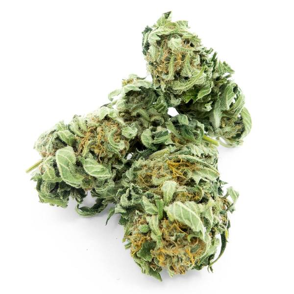 CBD Wholesale Clearwater